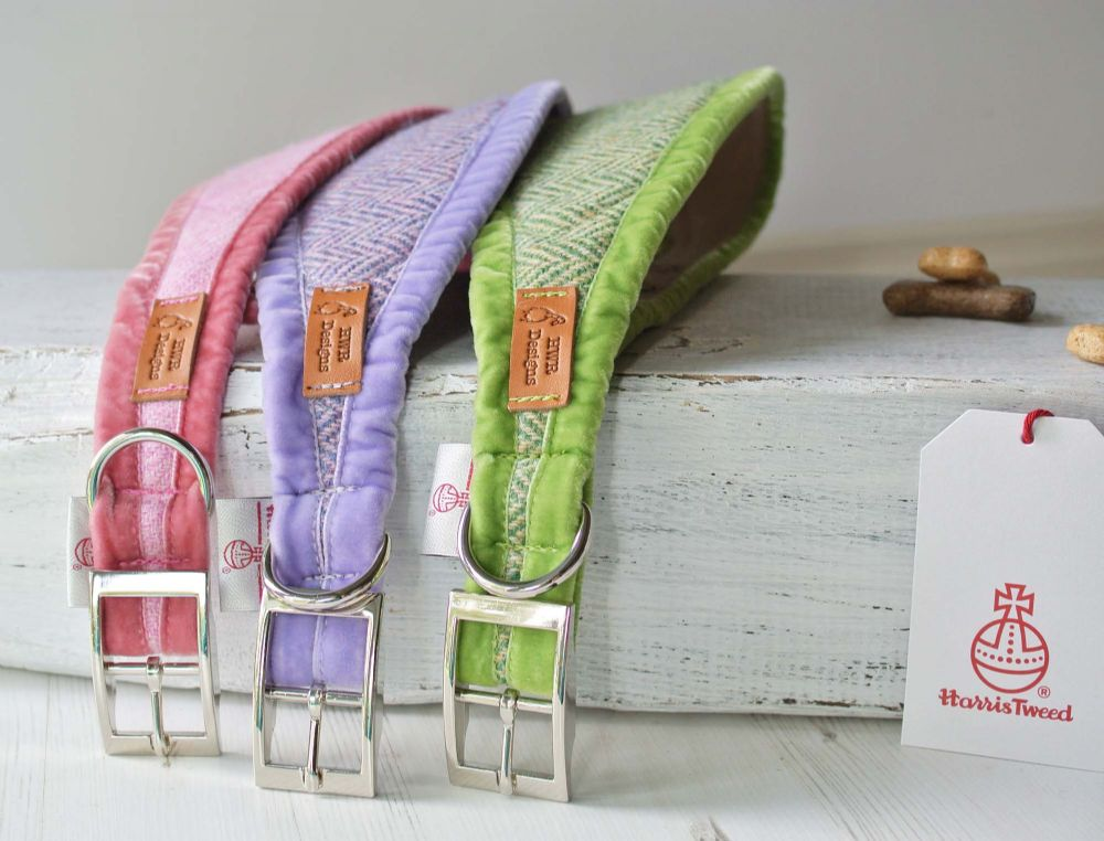 Sighthound Collars  - Brights Collections